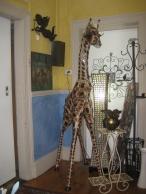 A giraffe!