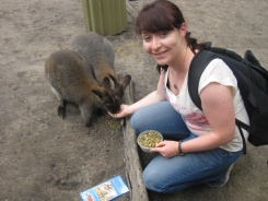 Feeding little kangaroos!