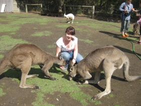 Feeding big kangaroos