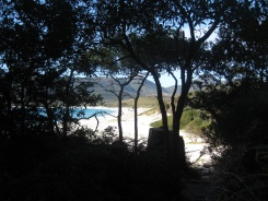 Wineglass Bay through the trees