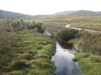 The lower plains of Cradle Mountain