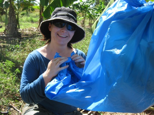 Bagging bananas
