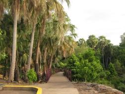 Botanical pathways