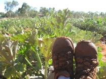 Zucchini feet