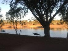 Peacocks at Lake Mary Ann