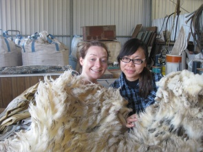 Getting cosy with the wool!!