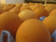 Beautiful clean eggs
