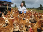 Chickens in the way!