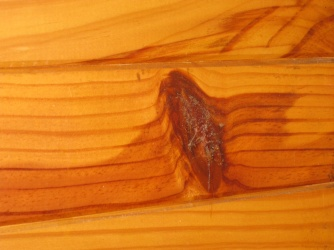 Cockroach infested wood