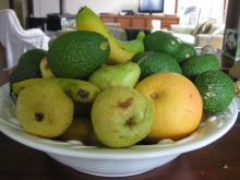 Avocados in the fruit bowl