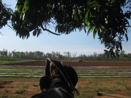 Feet on the Farm