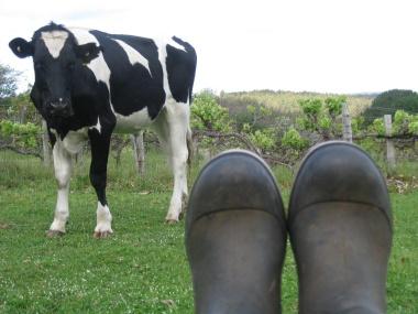 Feet on the vineyard