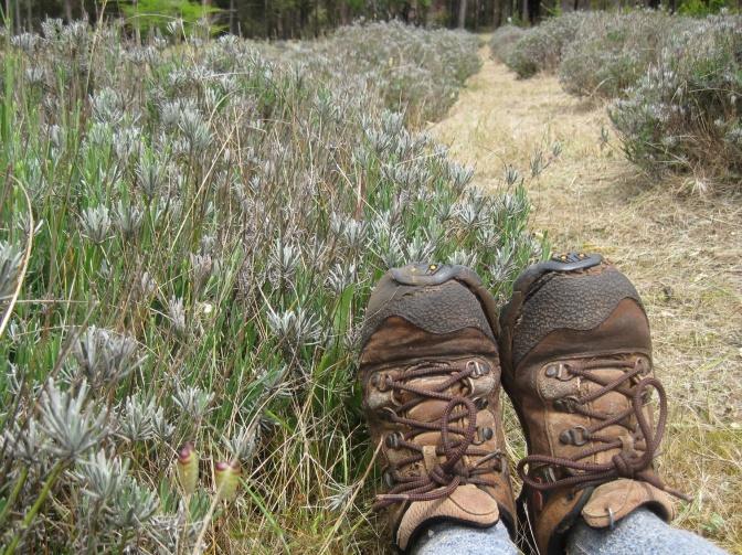 Lavender Feet