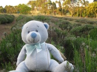 A lavender bear ;-)