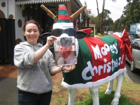 Christmas Cow George