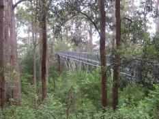 Walpole's Tree Top Walk