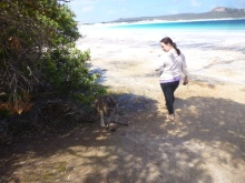 Just passing a kangaroo by!