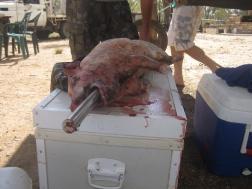 Pig prep