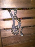 One of the snakes we saw!