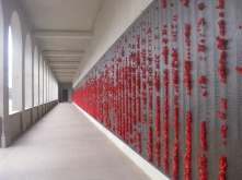 Poppies on the wall