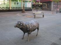 Ainslie's Sheep
