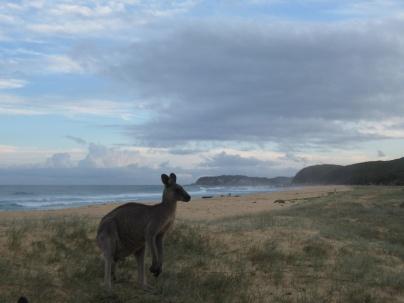 Scenic kangaroos