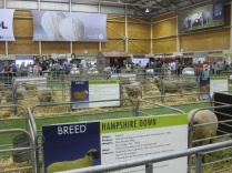 Sheep & Wool