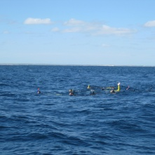 One group swimming with a whale shark