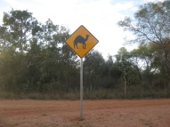 Camel signs!!!