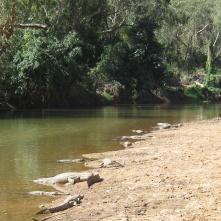 Sunbathing crocs