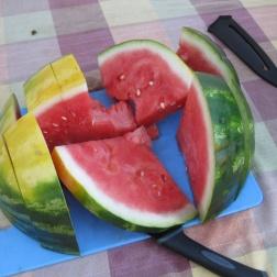 Big cut melon