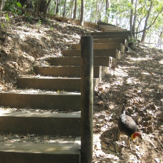 The stairs up with many bush turkeys