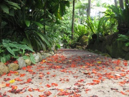Petals in the Botanical Gardens