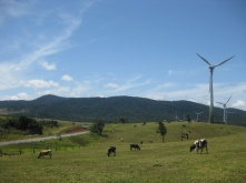 Passing cows and windmills