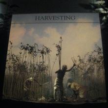 Harvesting jute