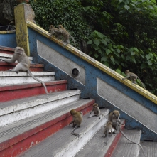 Monkeys a plenty!