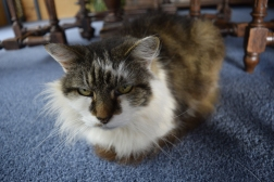 Just one of cats we sat for. This is Honeyfluff. We sat for her for 3 months. Great company. Sadly has died a few months ago :-(